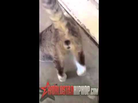 CATS GONE WILD, Cat Gets Starts Twerking To Booty Shaking Music