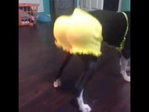 Twerking Dog (Vine Videos)